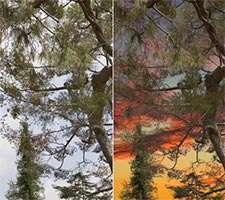 جداسازی و تغییر زمینه تصاویر، Vertus Fluid Mask 3.3.5