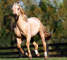 مجموعه 40 تصویر زیبا و با کیفیت از اسب