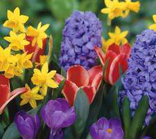 مجموعه 20 عکس از گل و گلزارهای متنوع