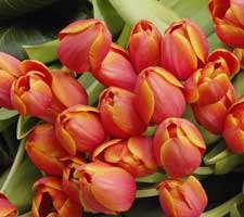 مجموعه 20 عکس از گل های مختلف