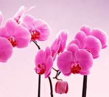 مجموعه 20 عکس از دسته گل های زیبا