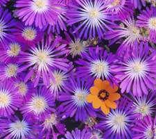 مجموعه 20 عکس HD انواع گل