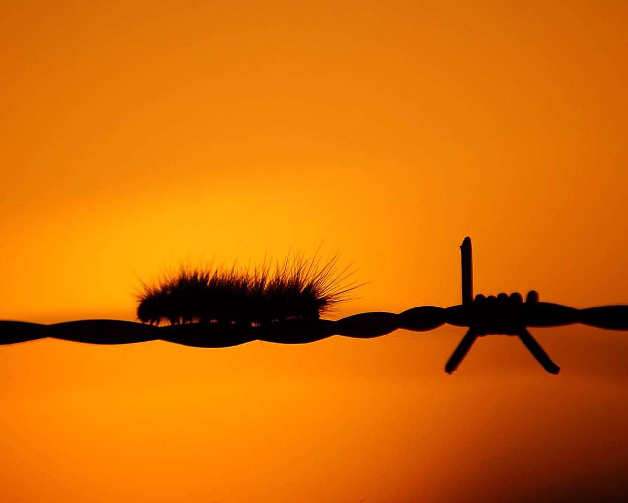 تصاویر وکتور سیم خاردار و آزادی، سری اول