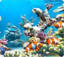محافظ صفحه نمایش زیبای آکواریوم، Sim Aquarium 3.8 Build 60 Premium