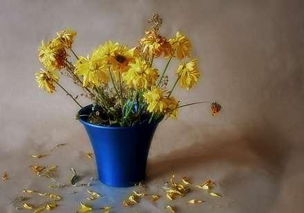 از بین رفتن گل ها