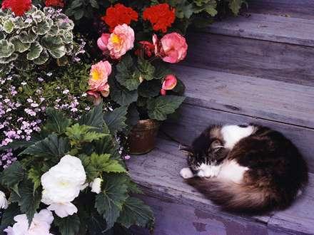 گربه پشمالو خوابیده