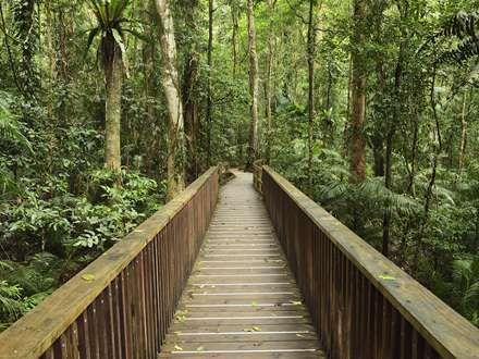 پل چوبی در جنگل