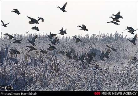 طبیعت زمستانی تالاب میقان اراک