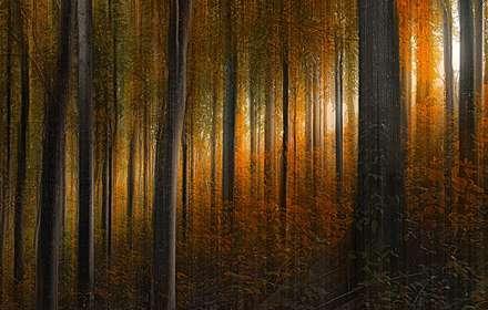 جنگل پاییزی رویایی