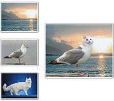 ویرایش و ترکیب تصاویر، FotoMix 9.2.7