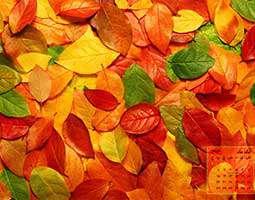 تقویم آبان ماه 1393 بهمراه تصاویر متنوع و زیبا در سایزهای مختلف