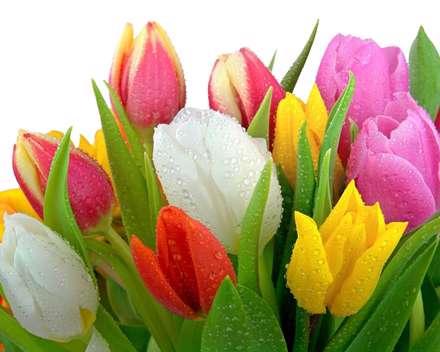 گل، لاله، بهار