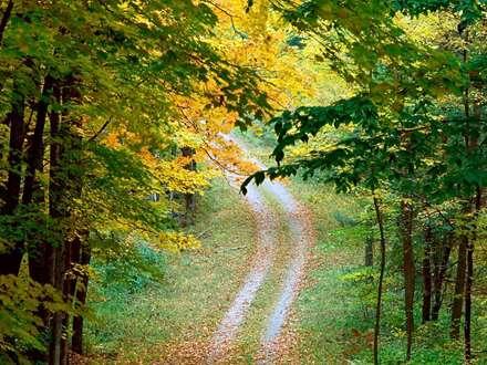 جاده جنگلی، درخت، جاده خاکی، جنگل