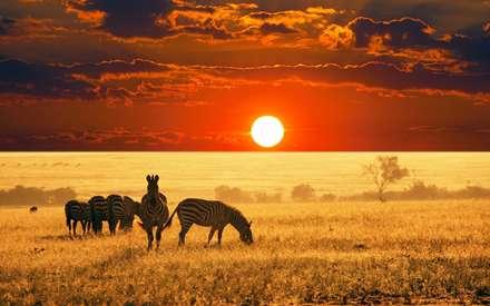 غروب خورشید، گورخر، طبیعت وحشی، آفریقا، دشت،Puesta de sol, cebra, salvaje, África, llano,