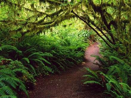 تونل، تونل درختی، راه جنگلی، درختان، جنگل، سرخس