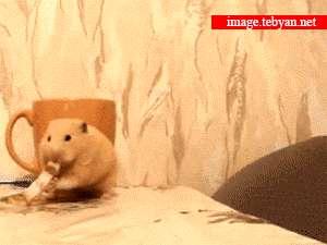 تصویر متحرک، همستر، گربه
