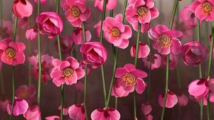 گل، صورتی، شگفت انگیز