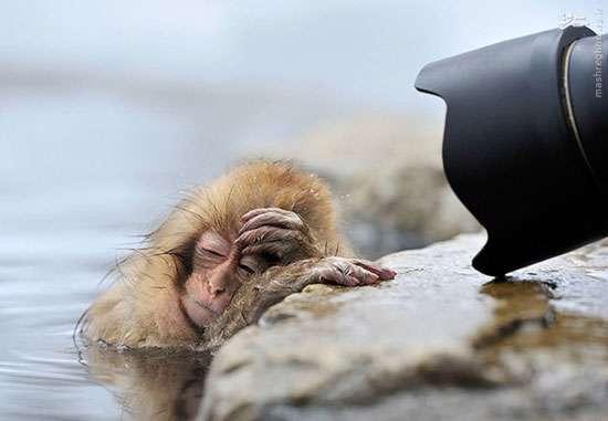 عکس های بامزه از حیوانات خوابالو