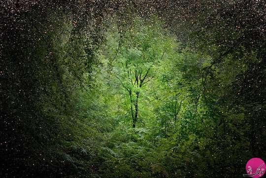 تصاویر جنگل های سحر آمیز در انگلستان