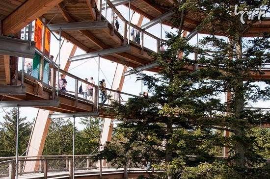 طولانی ترین مسیر جهان از بالای درختان