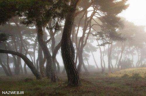 عکس های خارق العاده از طبیعت کره جنوبی