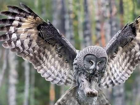تصاویر دیدنی از جانوران وحشی گالری