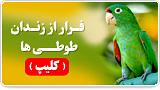فرار از زندان طوطی ها (کلیپ)