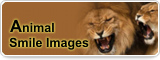 Animal Smile Images