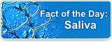Fact of the Day: Saliva