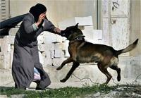 Filistinli Kadına Siyonist Köpeklerin İşkencesi
