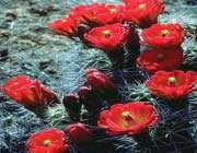 красивые цветы