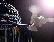 آزادي و رابطه آن با کرامت انساني(2)