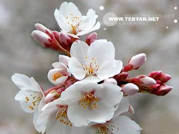بهار میهن