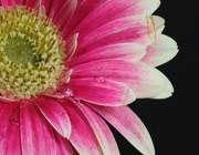 یابن الزهرا