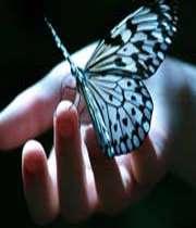 حرکت به سوی کمال بزرگترین آزادی است