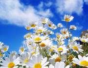آمد بهار