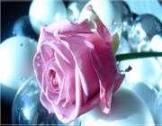 سرّ ذكر «تسبیح» عارفان واصل