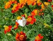 سحر به بوى گلستان دمى شدم در باغ