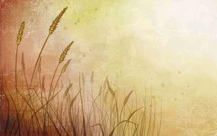 تصوير، IMAGE، نقاشي ديجيتالي، والپيپر، کاغذ ديواري، پس زمينه، زمينه، شاخه، گندم