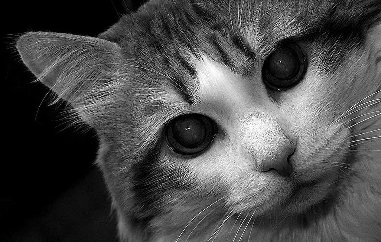 عکس سیاه و سفید حیوانات