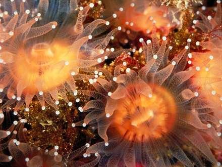تصویر، image، عکس،  منظره، دریا، مرجان، آبزیان، ماهی، موجودات دریایی
