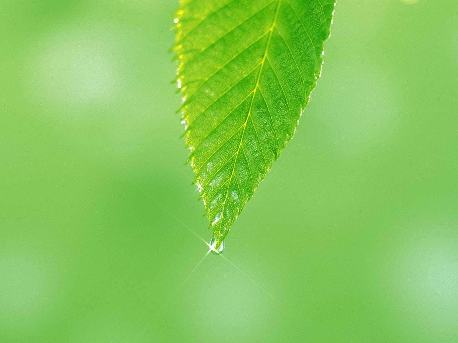 برگ سبز و قطره شبنم گنجینه تصاویر تبيان