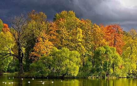 جنگل، Forest، دریاچه، Lake، طبیعت
