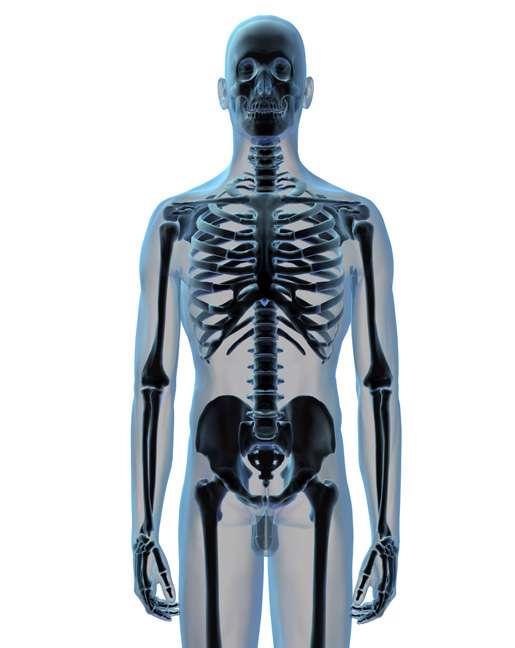 عکس اسکلت بدن