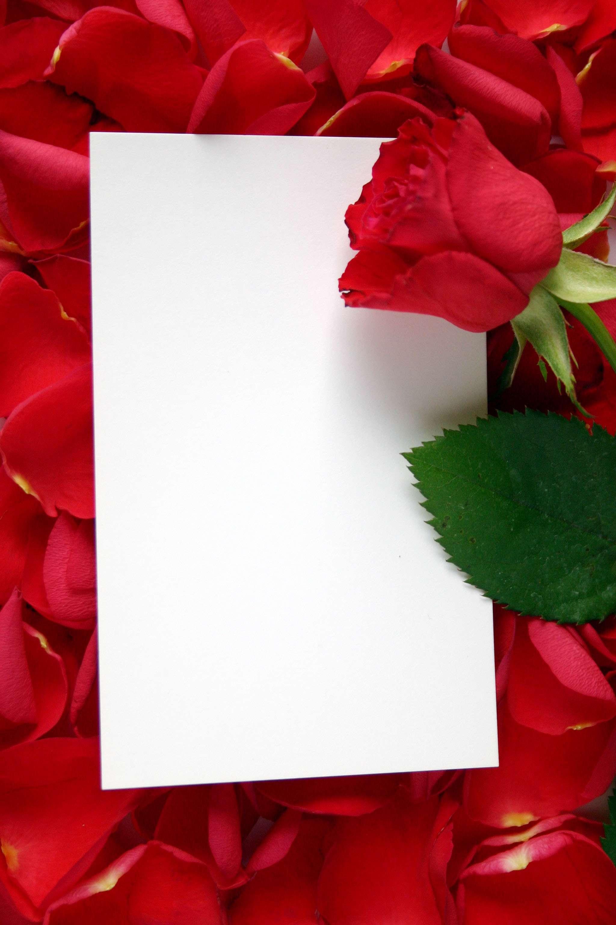 طراحی درخت ساده قاب گرافيكي كاغذي روي گلبرگهاي قرمز گل رز گنجینه تصاویر ...