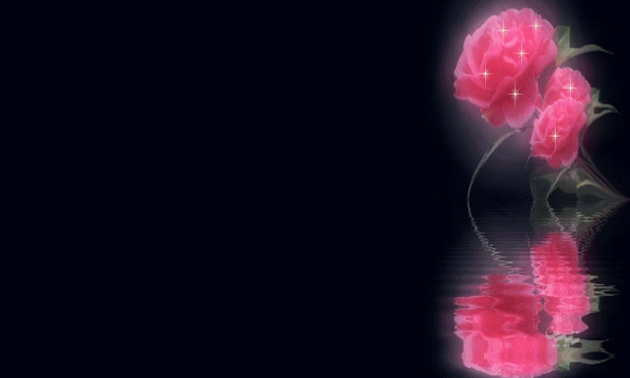 عکس گل رز سیاه