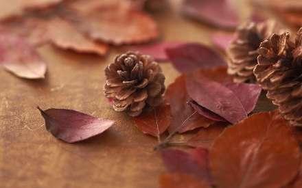 کاج، برگ، پاییز، Pine, Leaf, Autumn