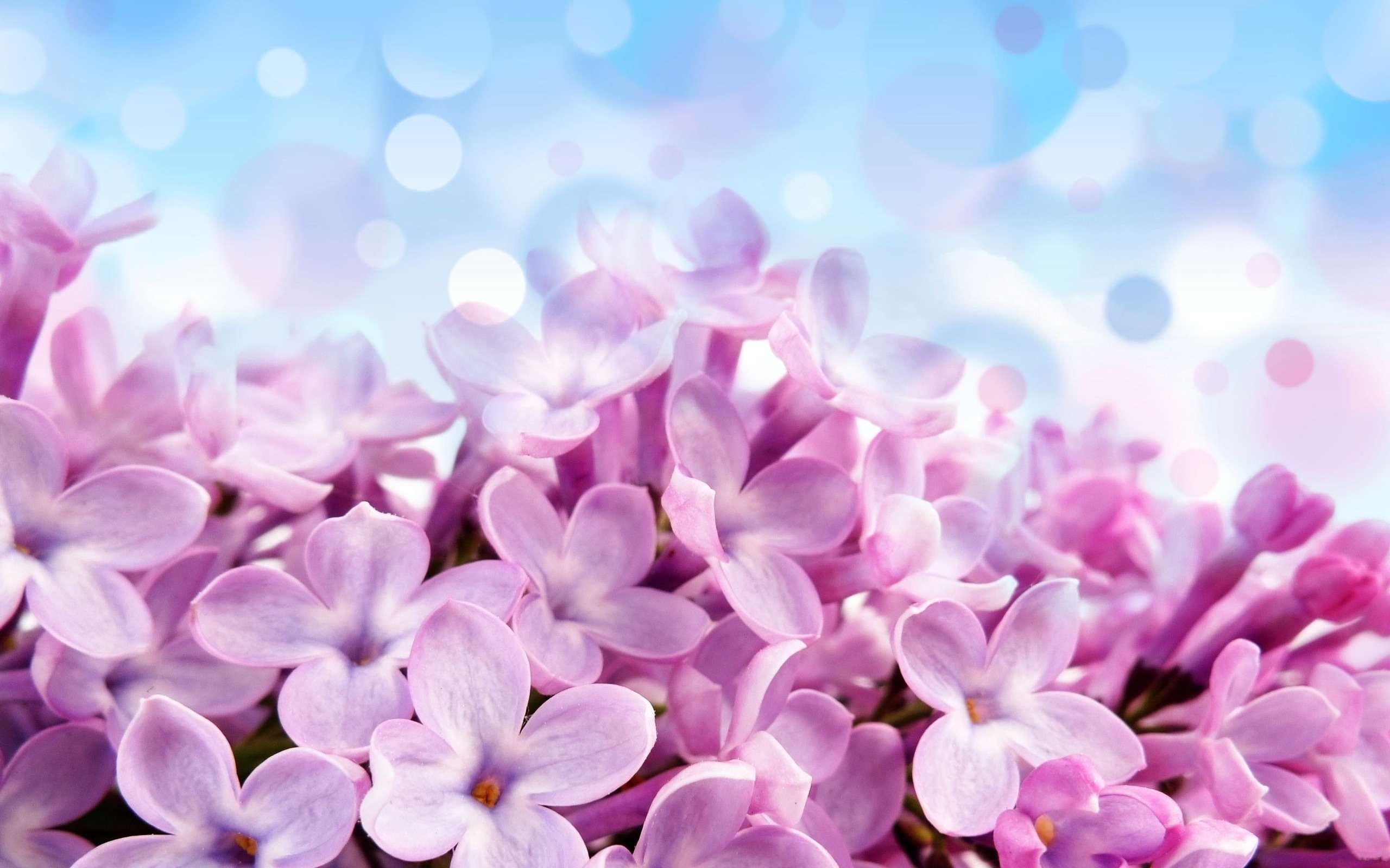 تصویر زمینه گل های بنفش گنجینه تصاویر تبيان