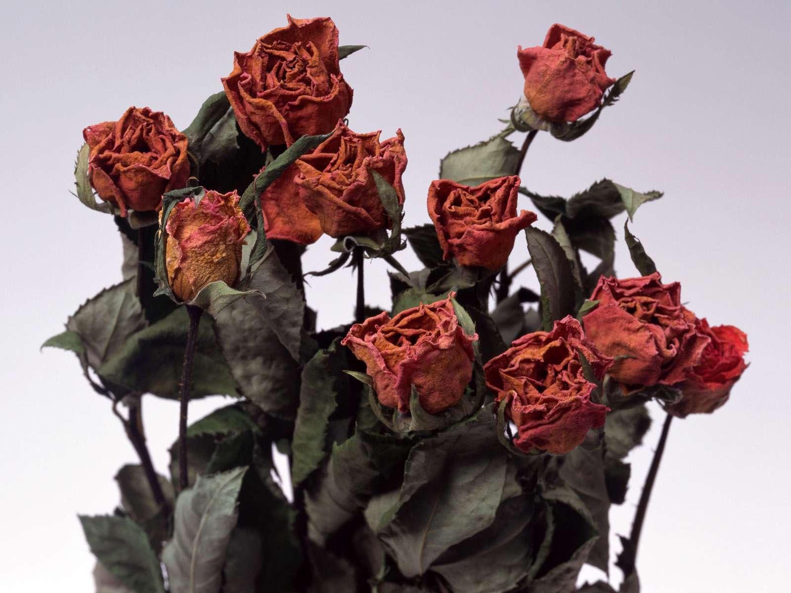 عکس گل خشک