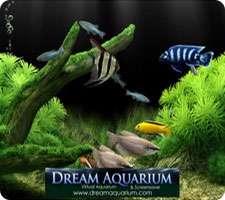 محافظ صفحه نمایش آکواریوم، Dream Aquarium Screensaver 1.2605